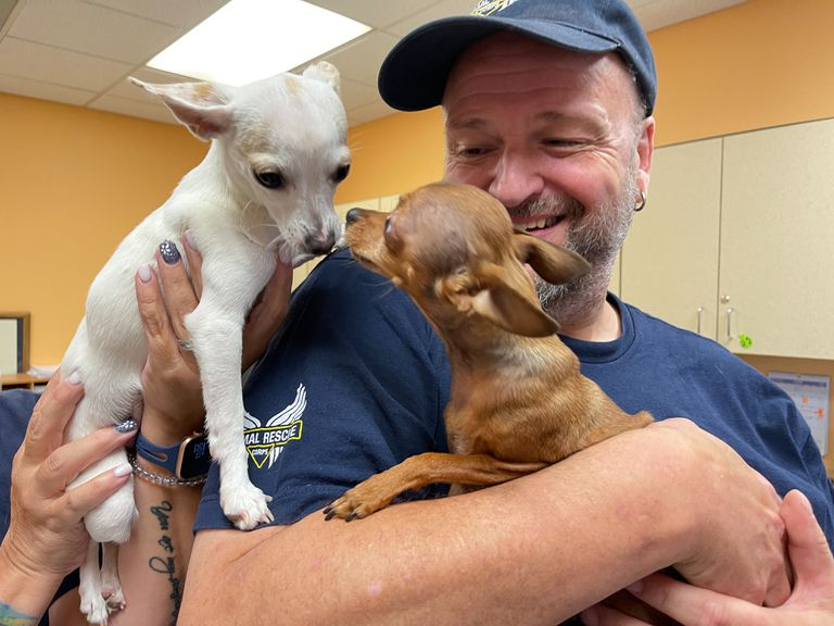 Tim woodward with puppies