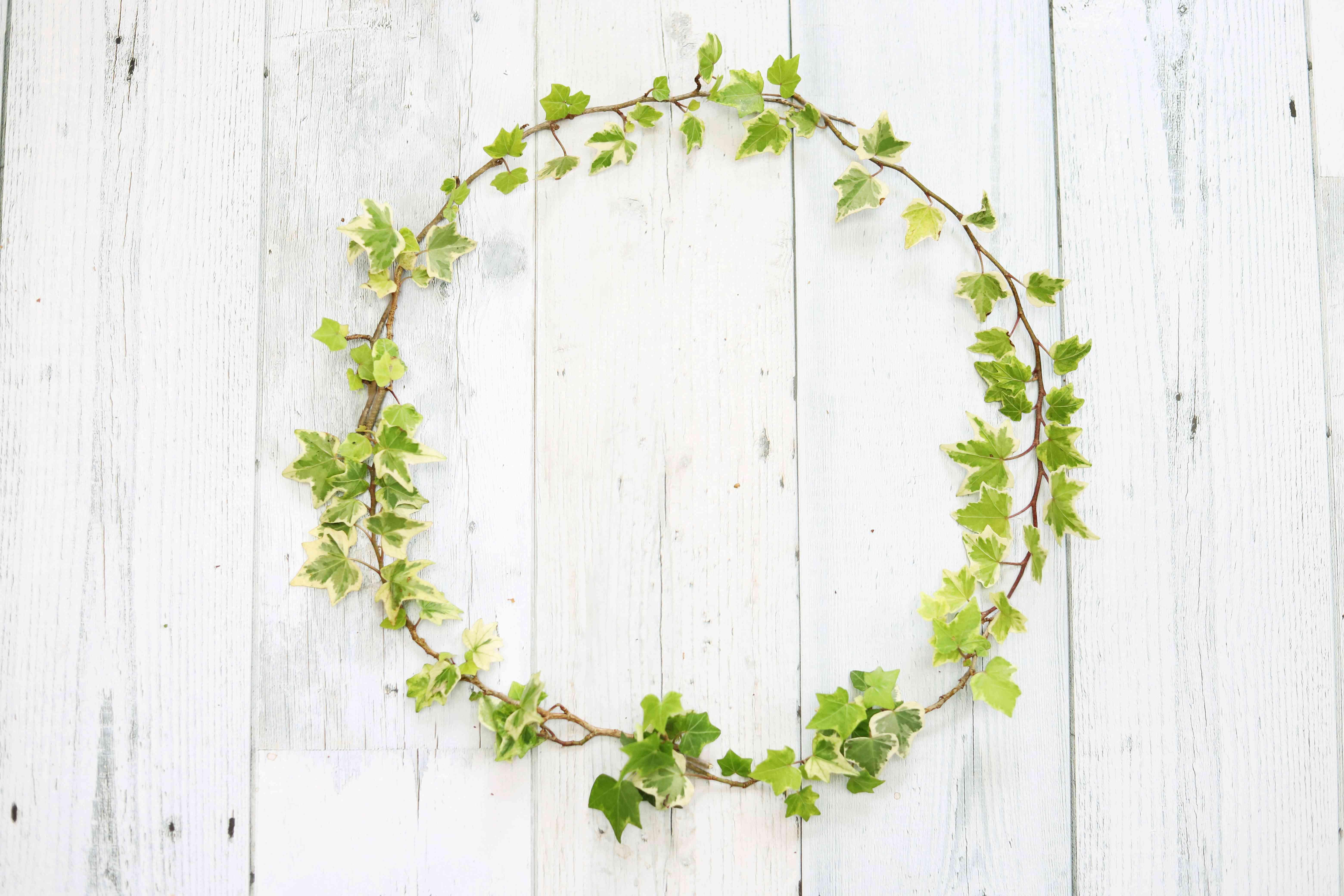English ivy wreath, circle frame, background image