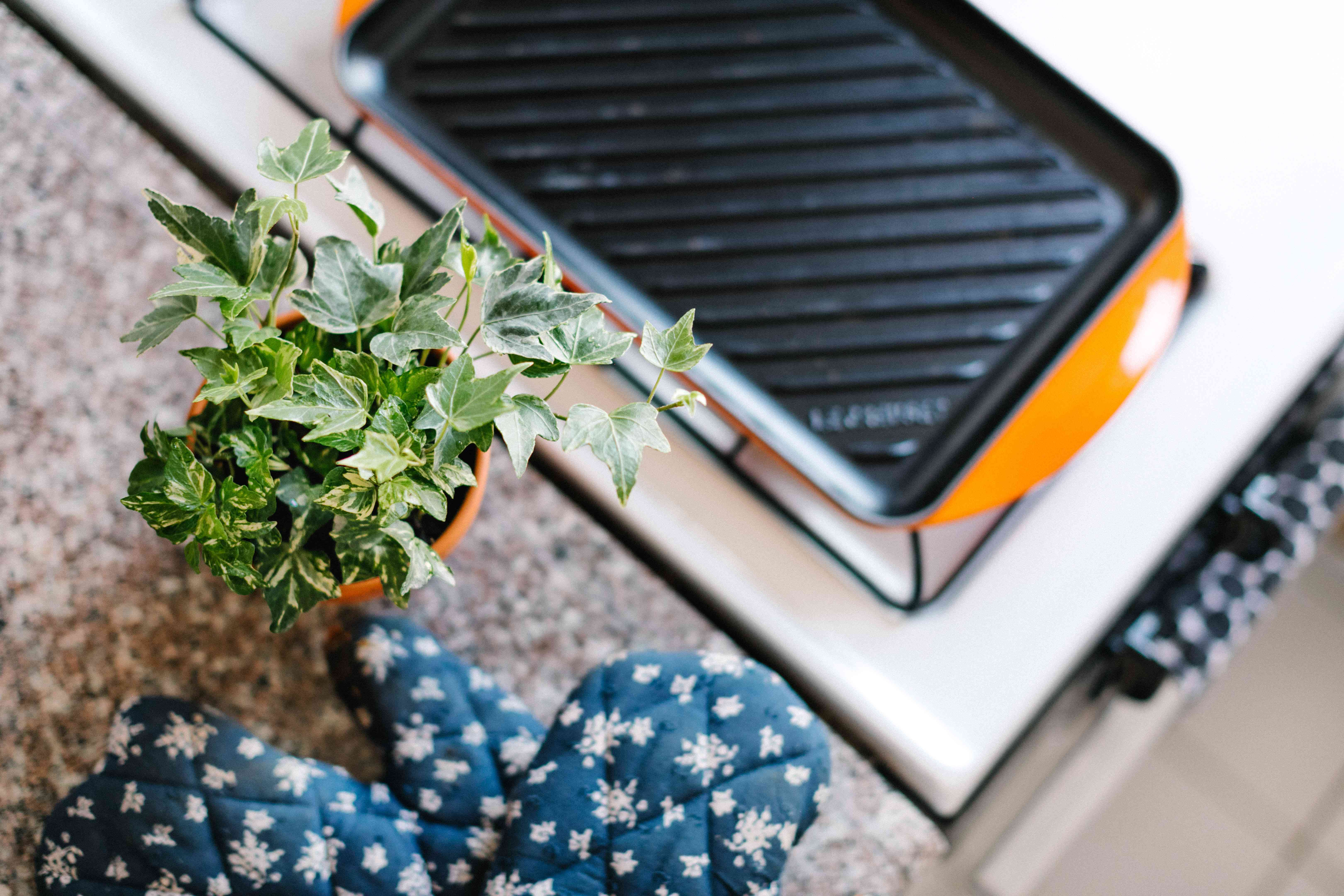 English ivy plant next to kitchen mitt and hot plate