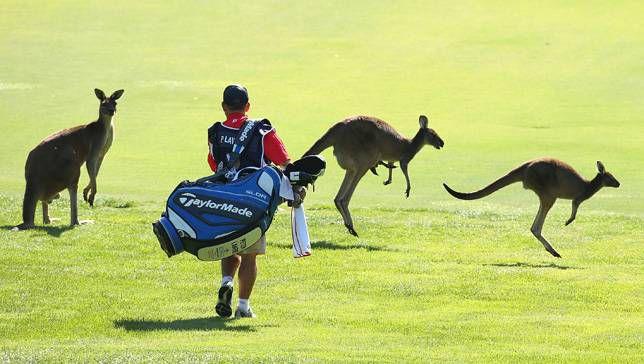 Por qué los canguros de Australia acuden en masa a las calles