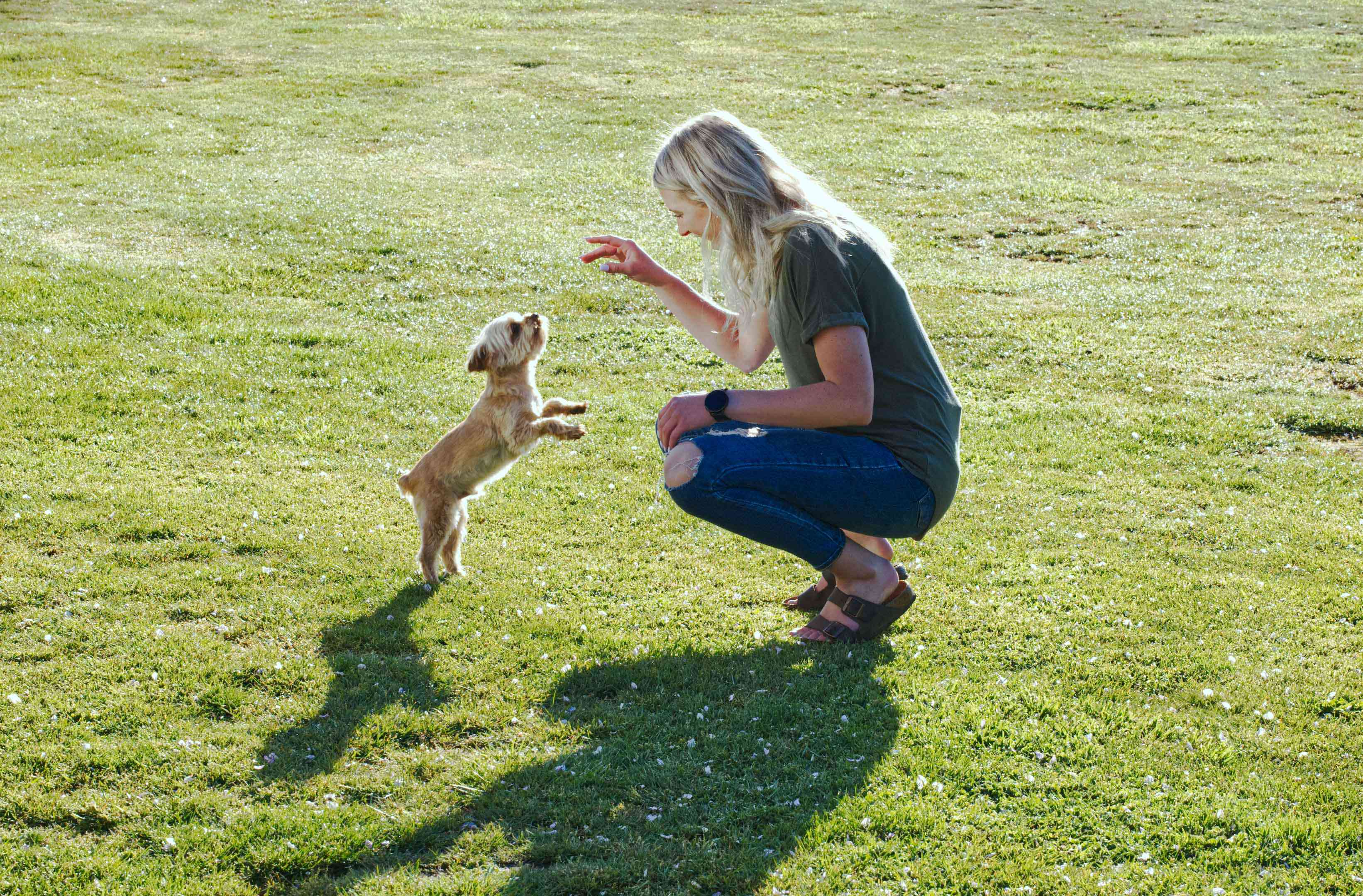 blonde woman and small dog perform tricks while playing outside on green lawn