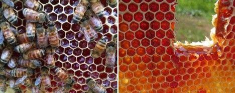 brooklyn bees turn red photo