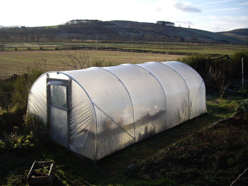 Polytunnel 'greenhouse' In a cottage garden near Aberdeen.