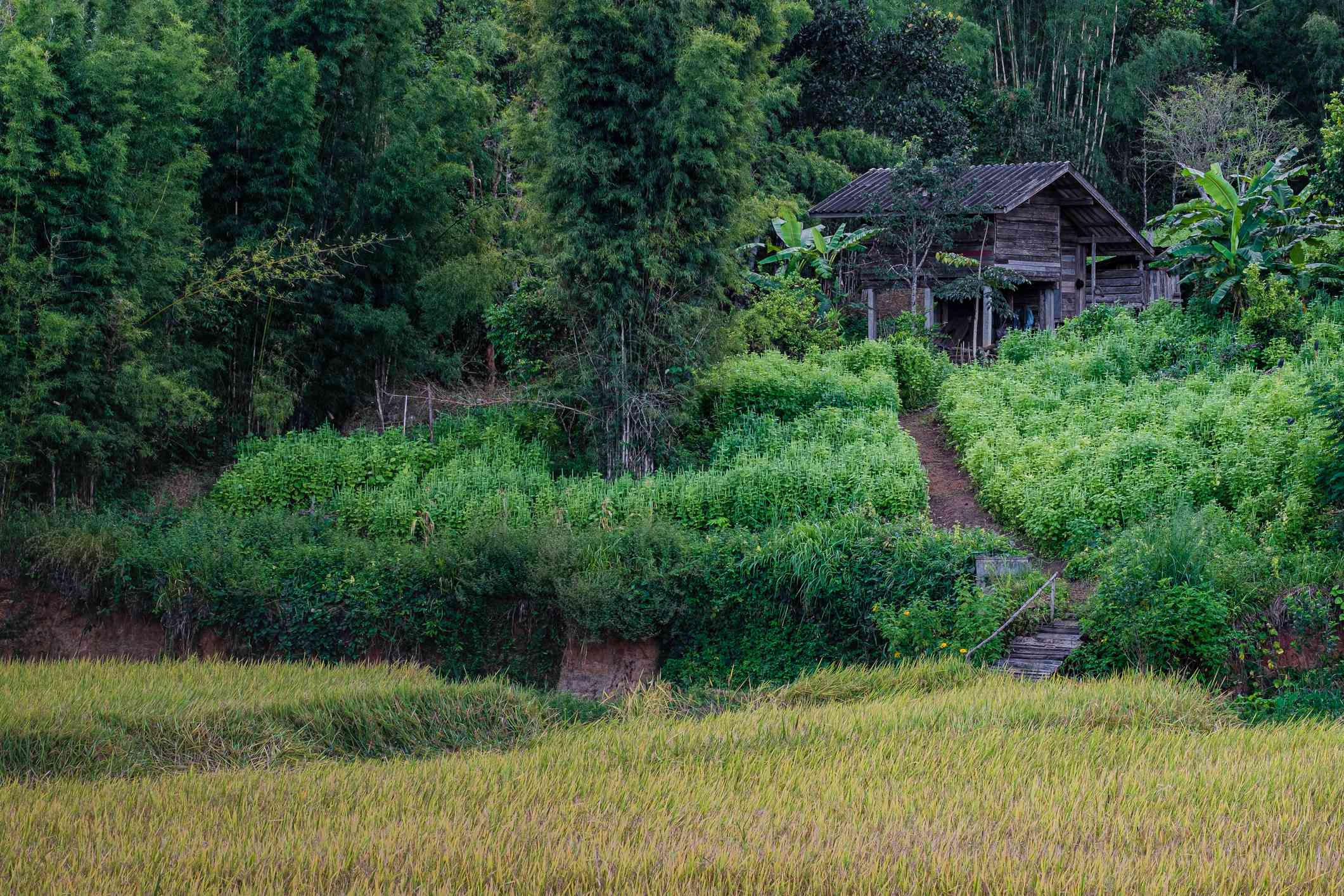 Vegetable garden with small house in rural Chiangmai, Thailand.