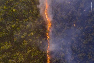 'Bushfire'
