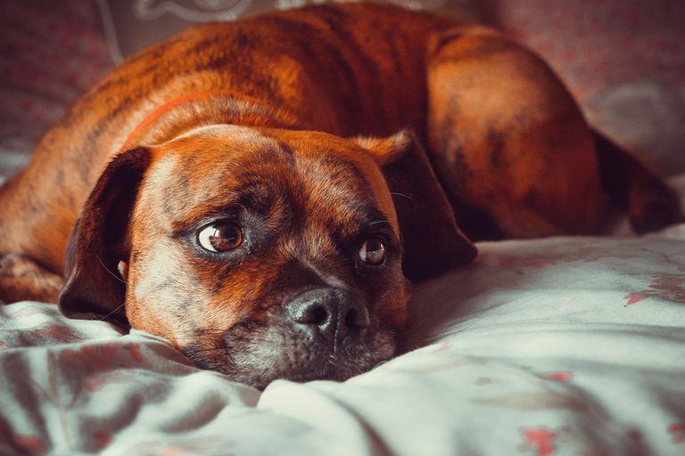 ¿Cómo puedo lidiar con el dolor de perder a mi mascota?