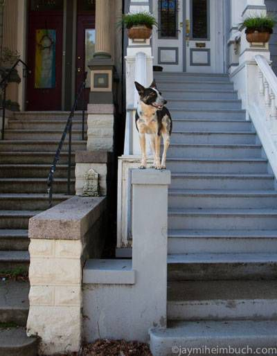 Niner sits on a pillar of a house's front porch