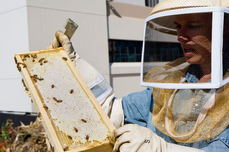 Meredith May of the San Francisco Chronicle with the Chron's Rooftop Beehive