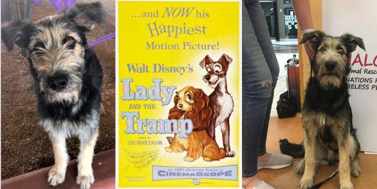 Shelter Dog es la nueva estrella de 'Lady and the Tramp'