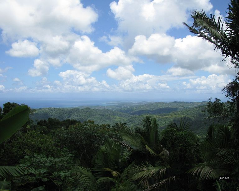Expansive view of the rainforest canopy top