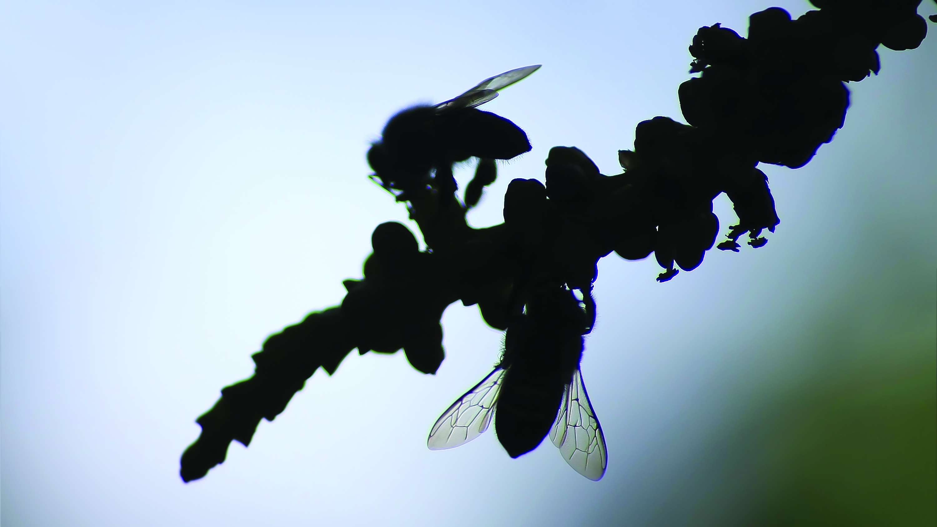 silhouettes of bees on a palm flower