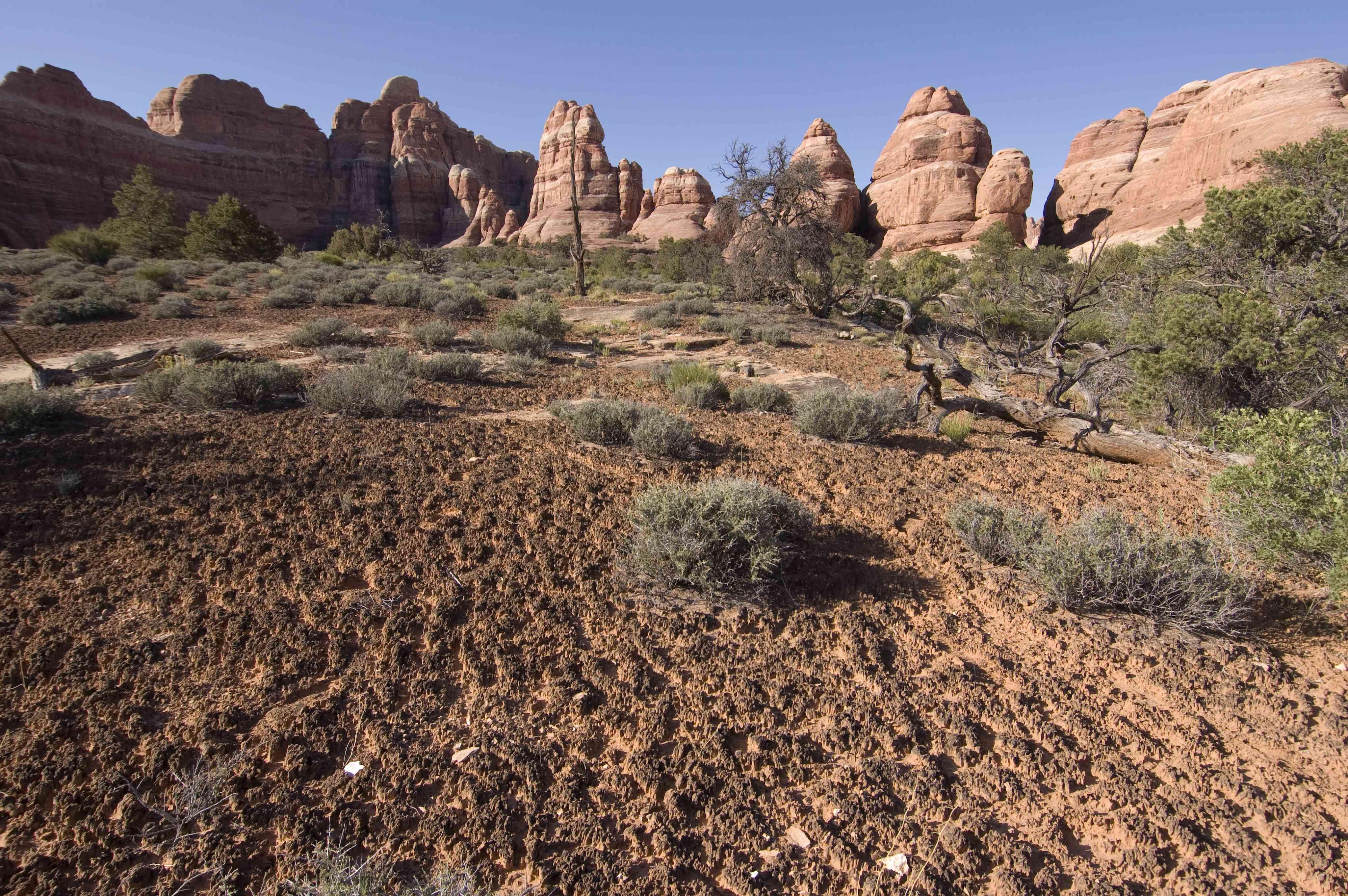 Cryptobiotic soil crust.