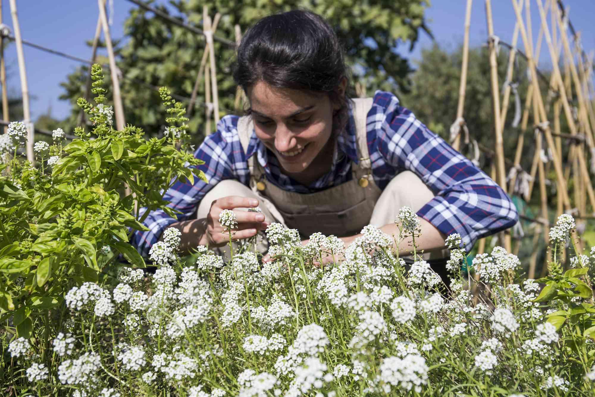 woman looking at yarrow plants