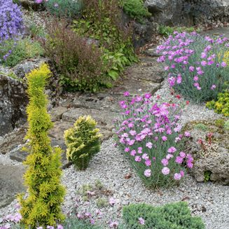 A pathway in a rock garden flanked by different kinds of flowers