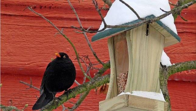Cómo cuidar de las aves este invierno