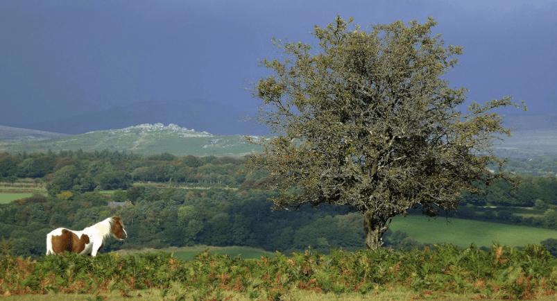 Darmoor National Park, England