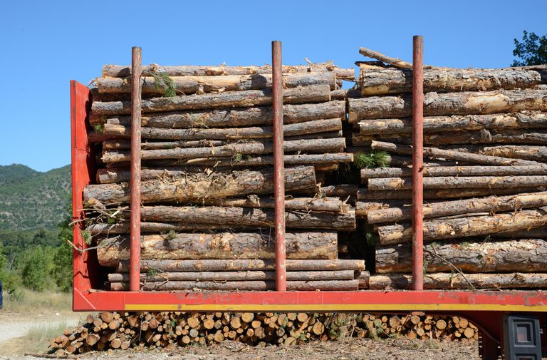 Lumber on a red transport truck.