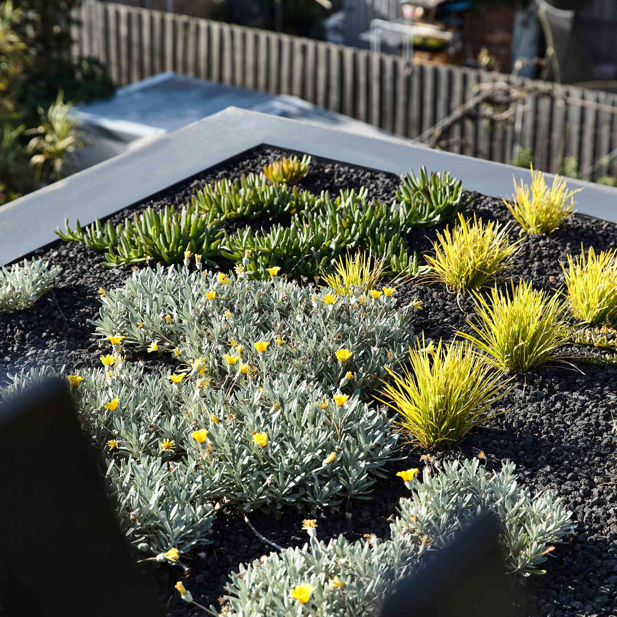 Green roof on Union House