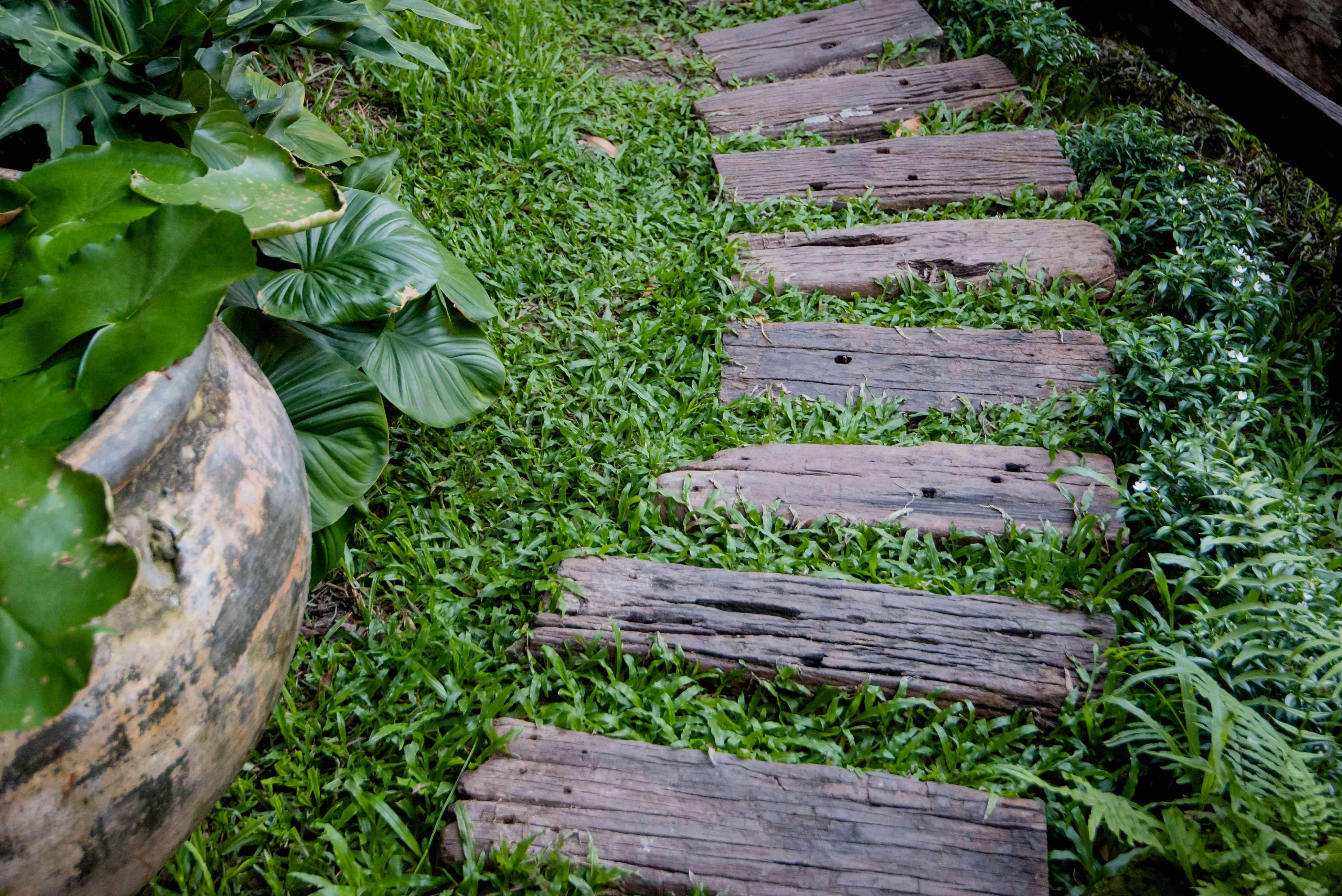 Wooden planks making a path