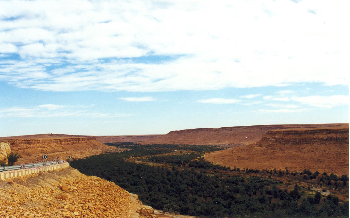 oasis in Talfilat, Morocco filled with green trees set in the desert against blue sky and white clouds oasis