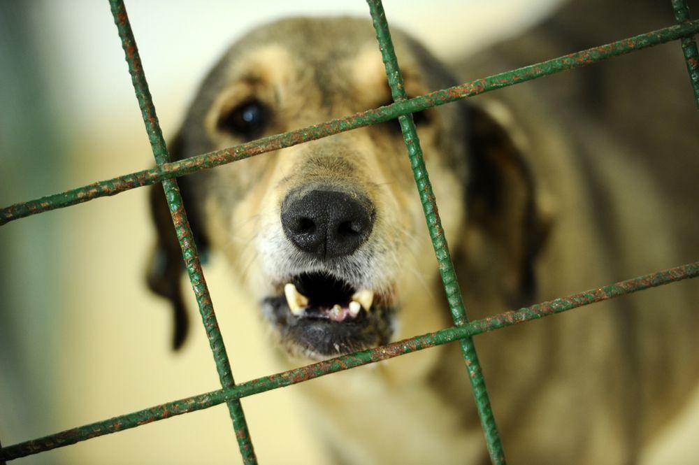 dog growling or barking at shelter