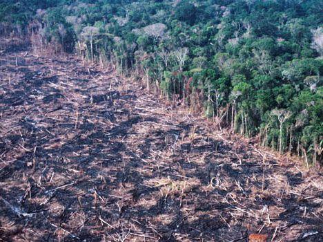 amazon deforestation photo