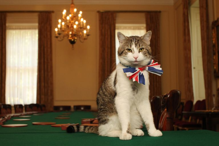 cat sits atop green table in union jack bow tie