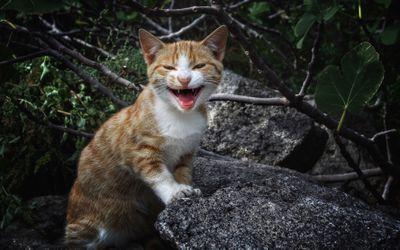 kitten meowing while standing on rocks