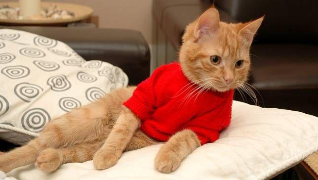 25 fotos de mascotas en suéteres para que todos se sientan cálidos y difusos