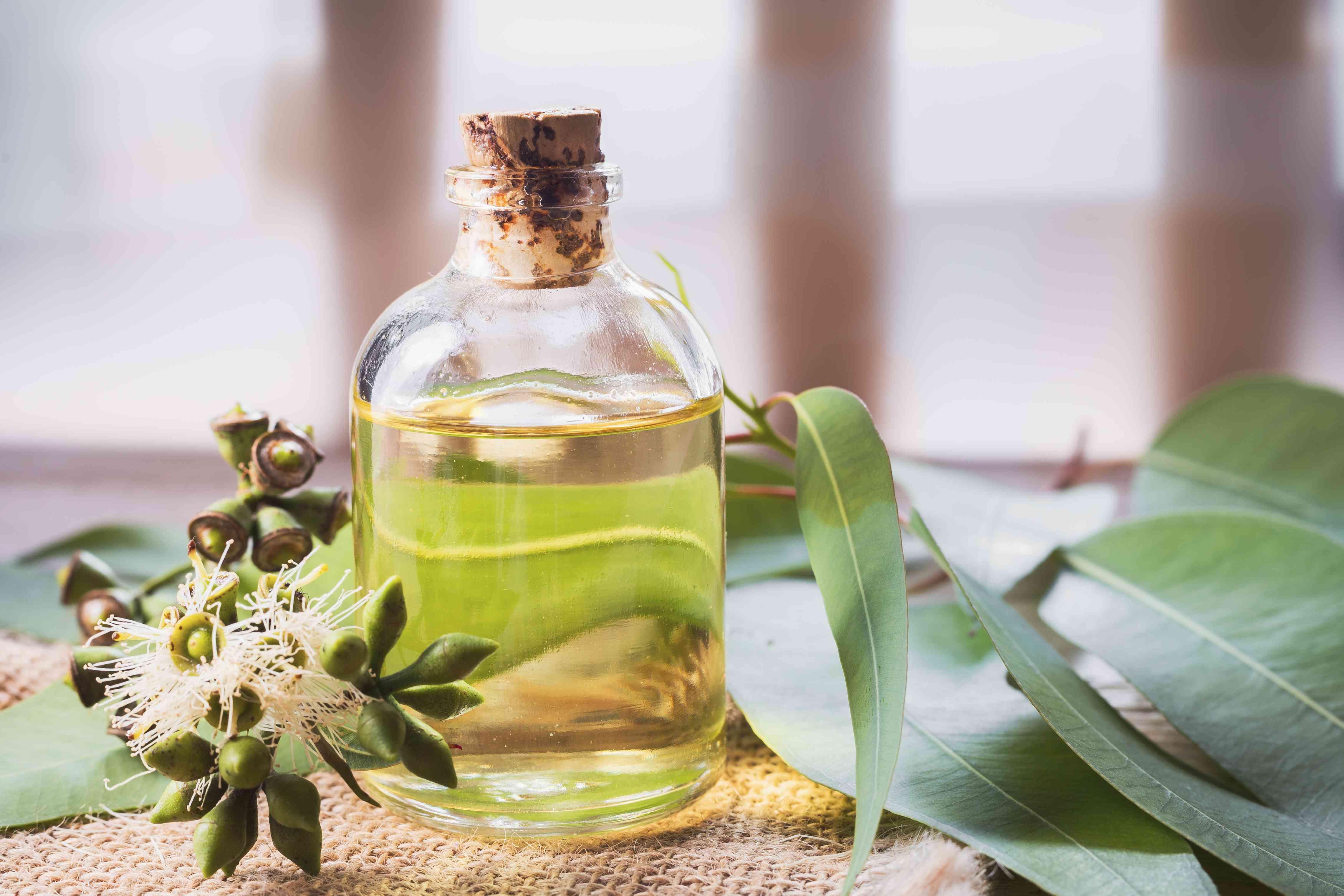 eucalyptus essential oil in bow