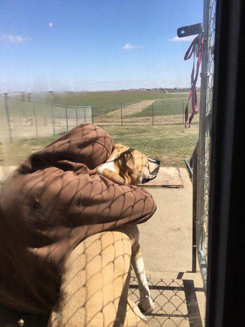 A dog and woman hug near kennel