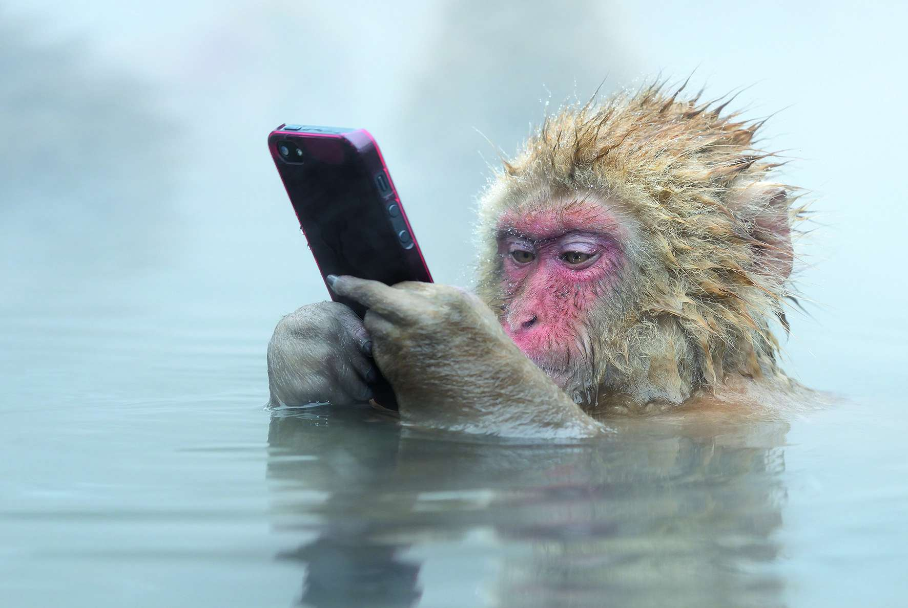 snow monkey with iPhone