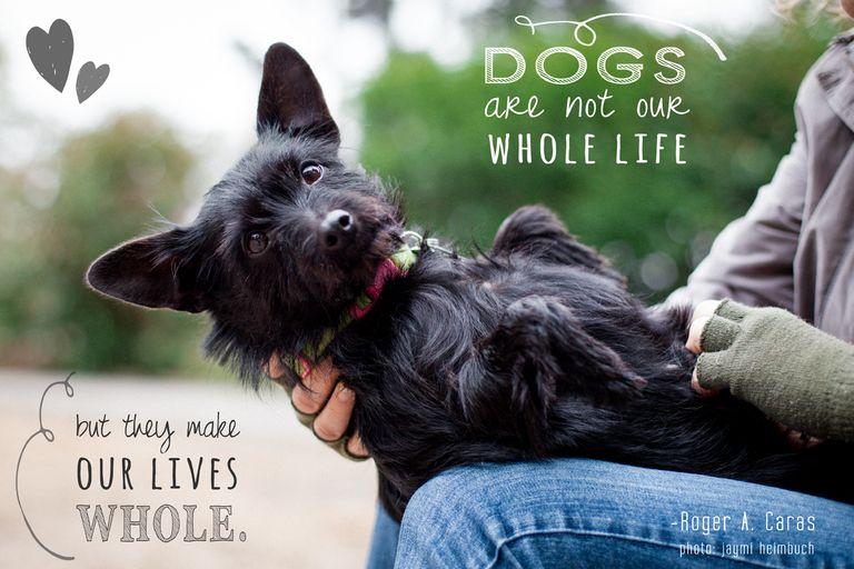 10 citas sobre perros que calentarán tu corazón