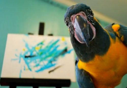painting parrot photo.