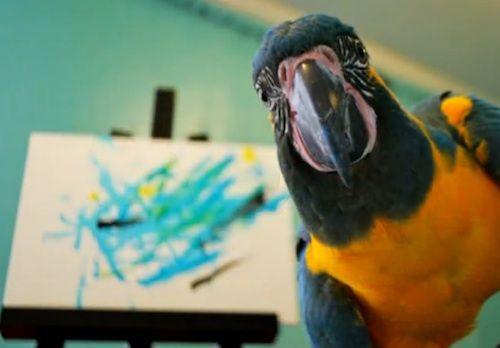 Loro pinta retratos abstractos de loros, para loros