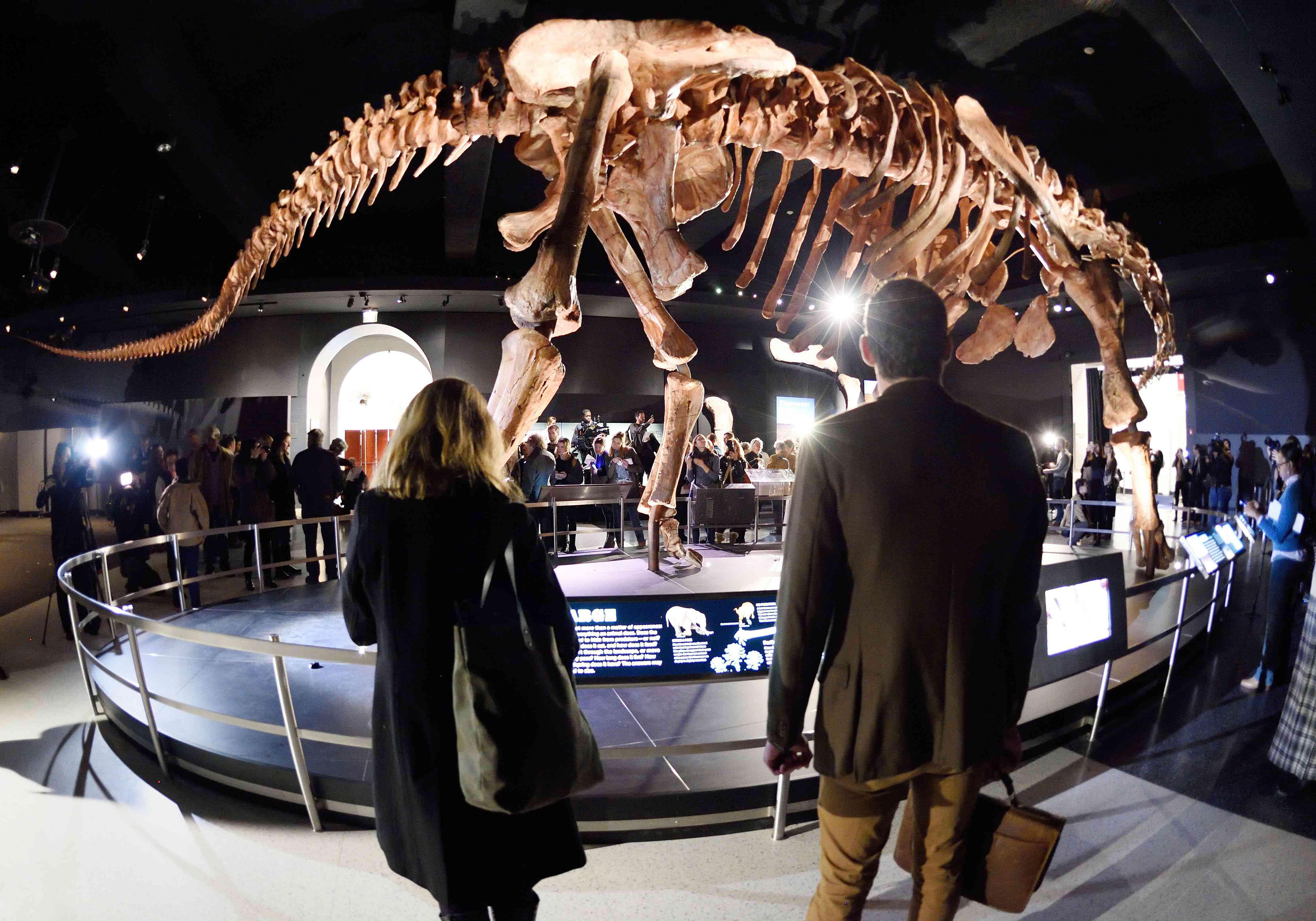 Patagotitan titanosaur display at the american museum of natural history