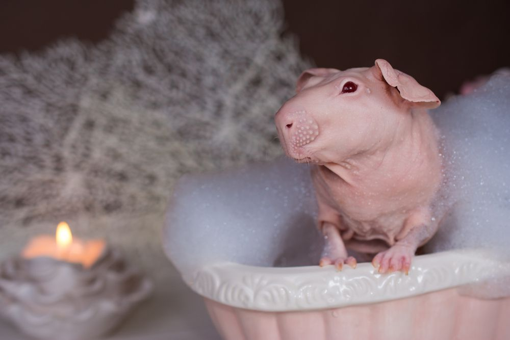 Perhaps that adorably wrinkled skin comes from too much time soaking in warm baths...