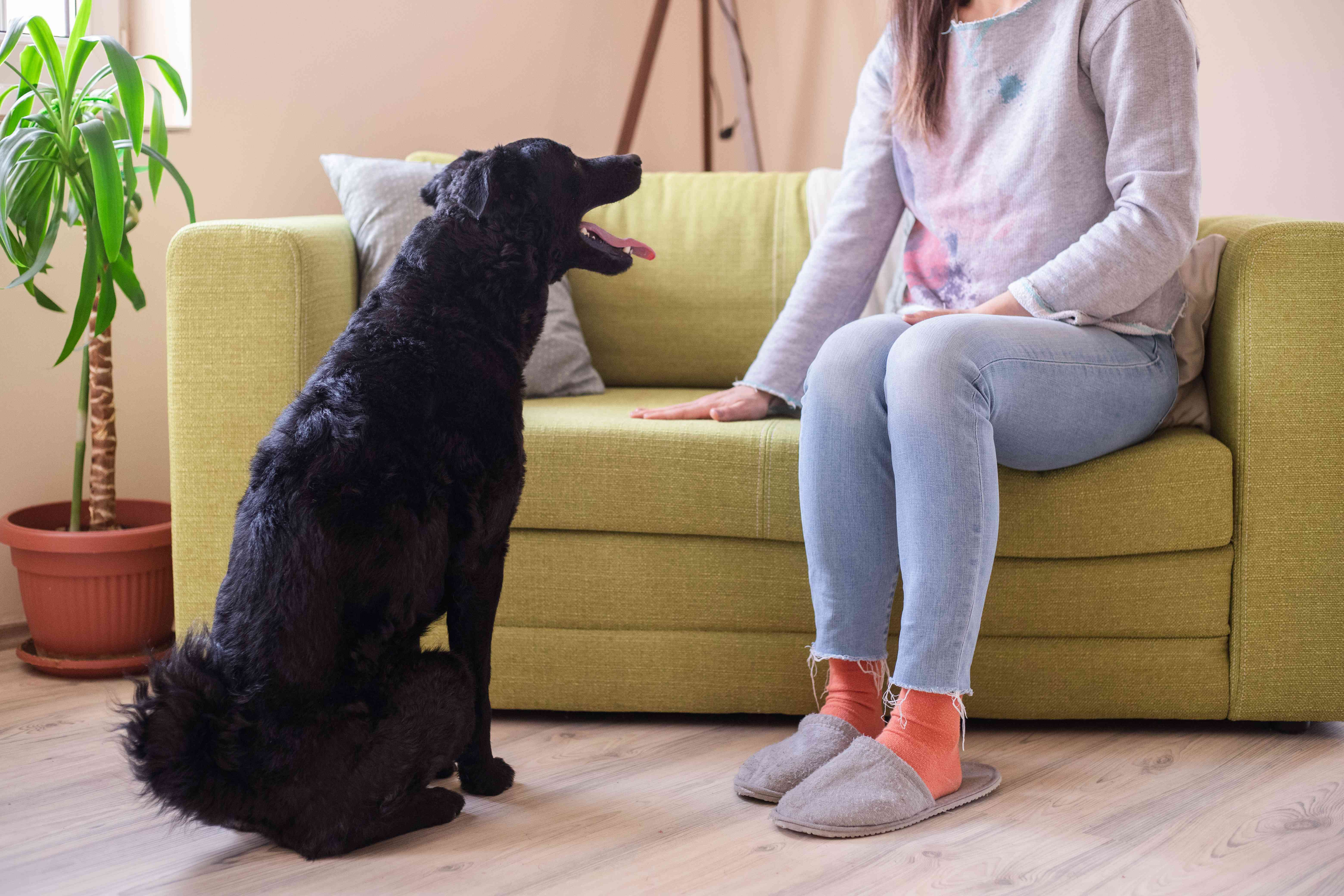 person sits and pats on green couch while black dog stands and stares at them