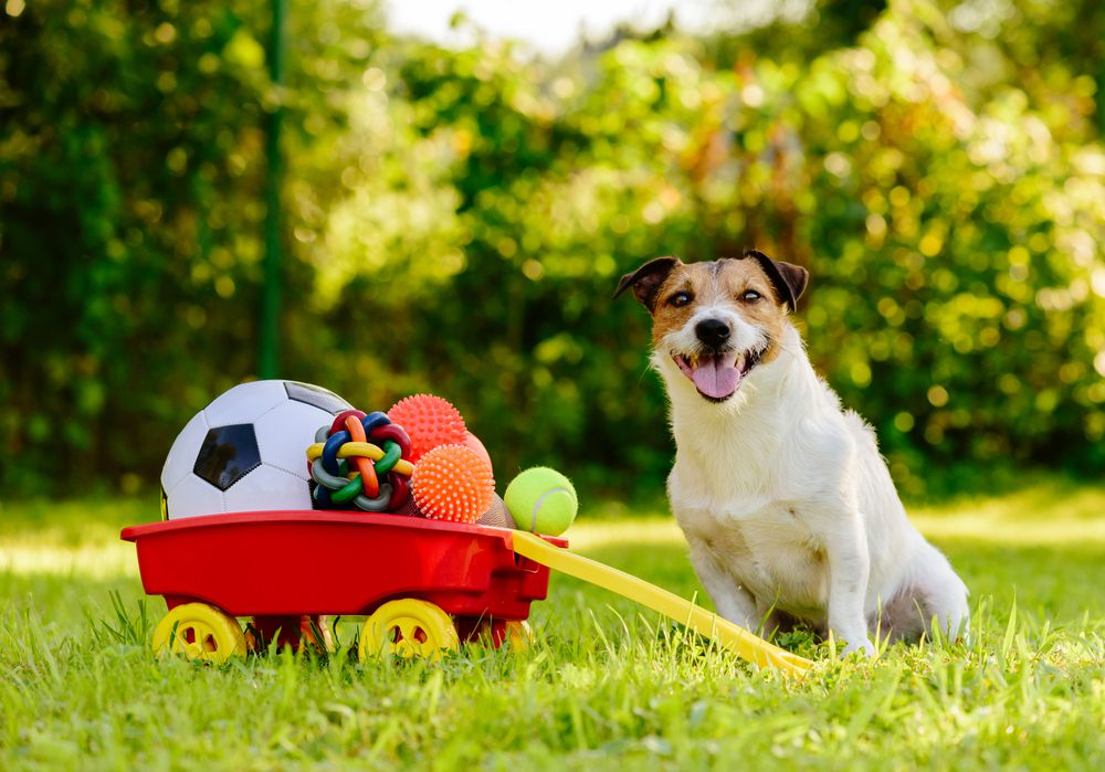 dog with wagon of toys