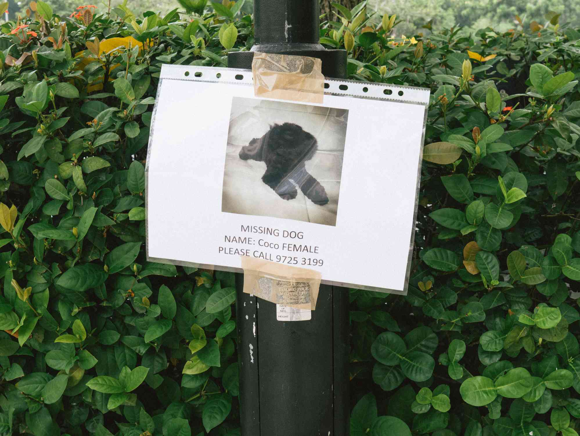 A lost dog poster with information on a poll.