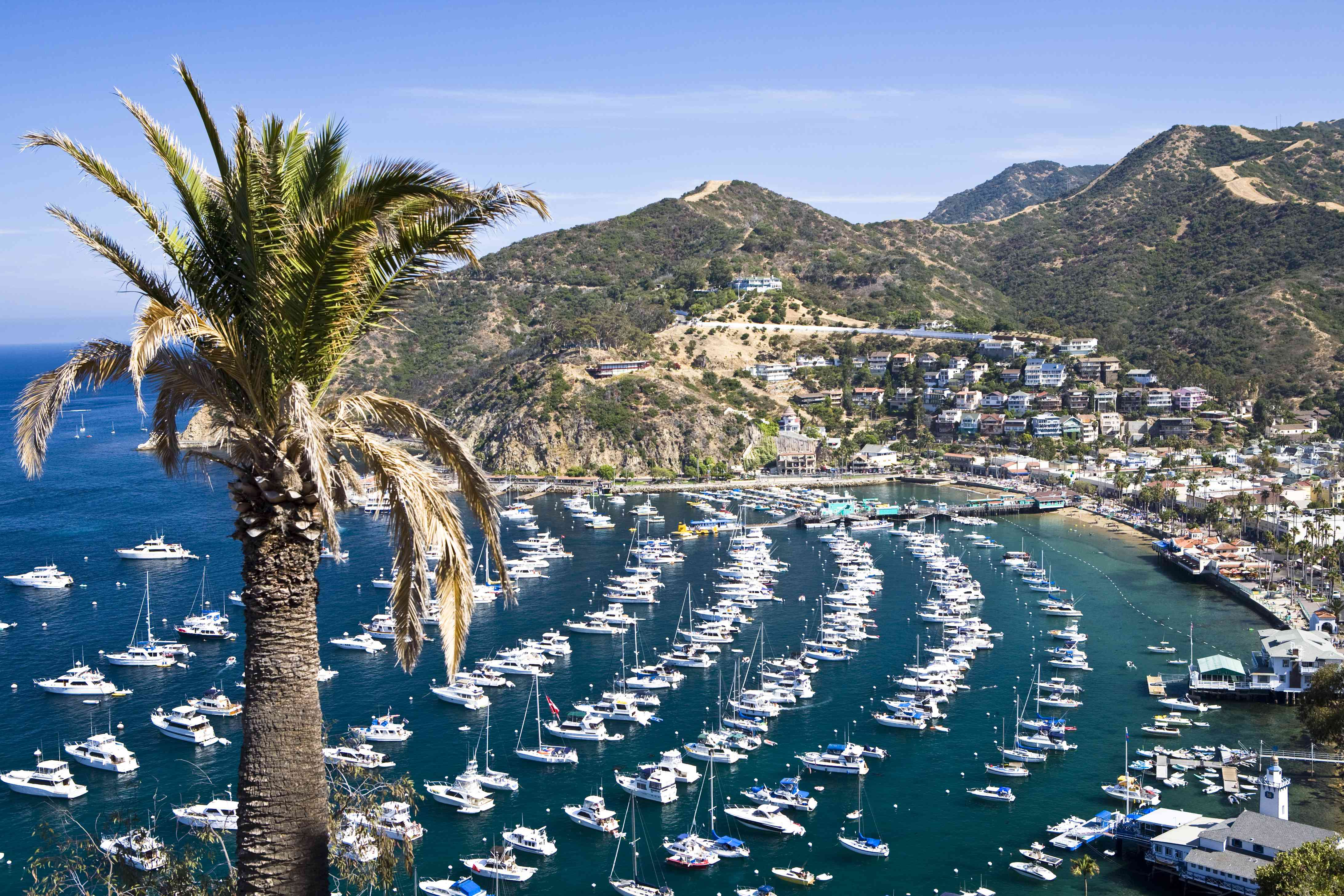 Boats lined up in busy Avalon Harbor on Catalina Island