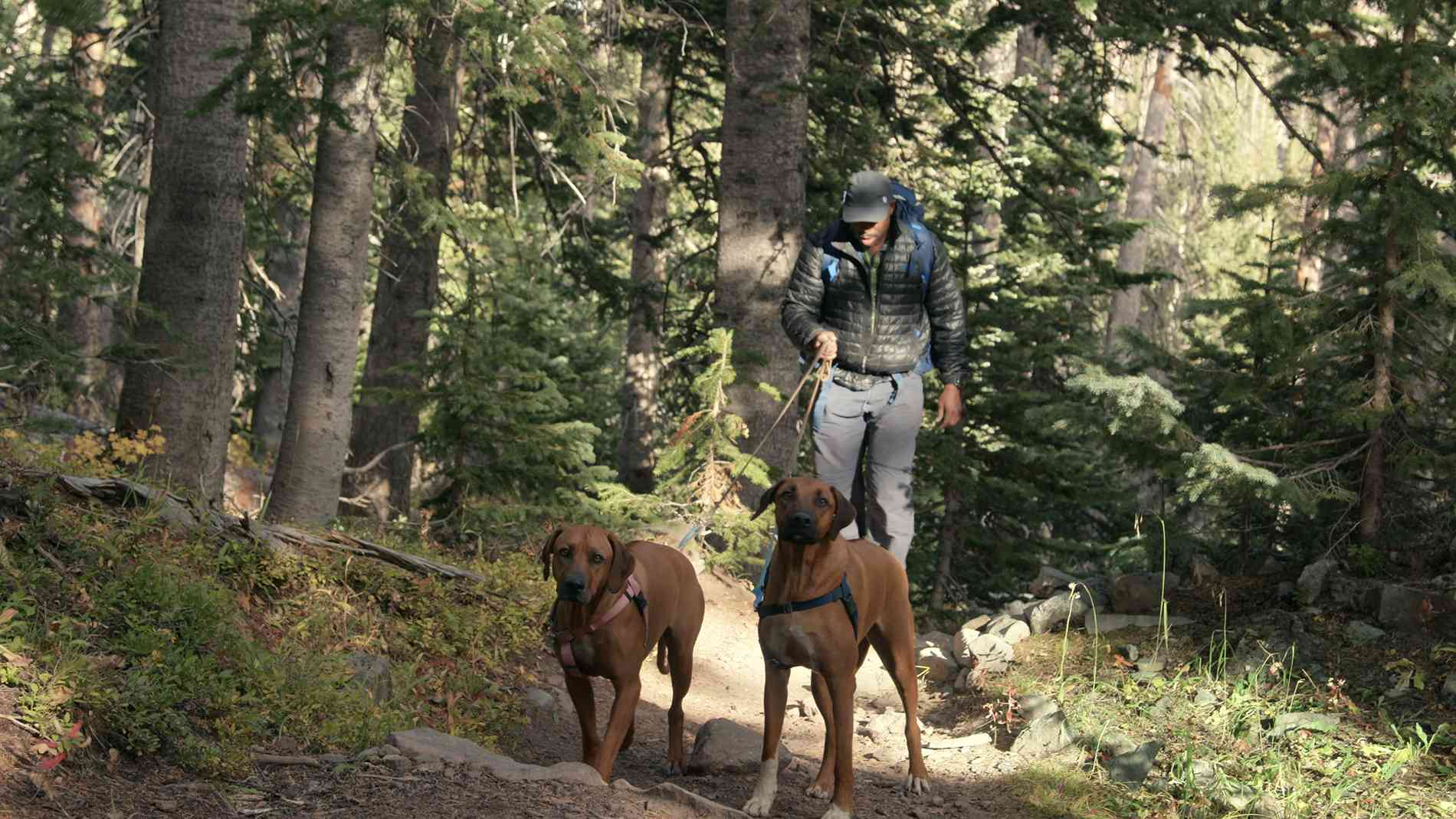 Leland Melvin hiking in Colorado with Zorro and Roux