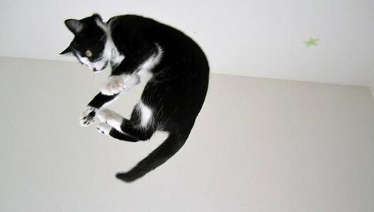 A cat jumping in the air