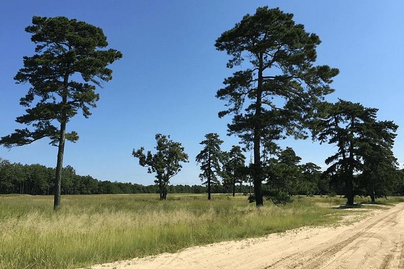 Colliers Mills Wildlife Management Area, Jackson, NJ