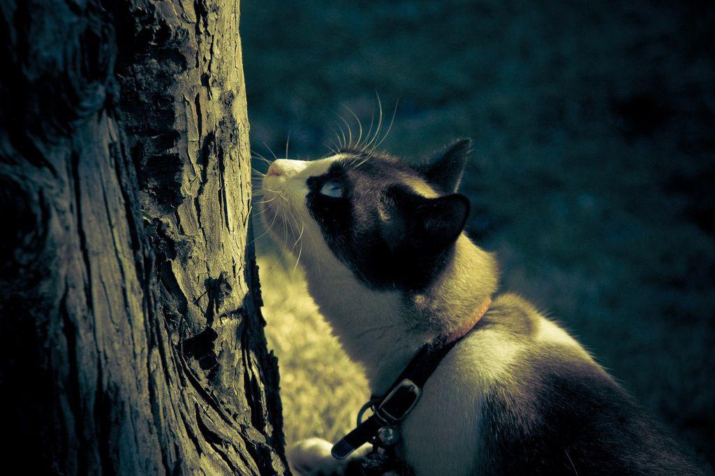 cats have a nose and vomeronasal organ