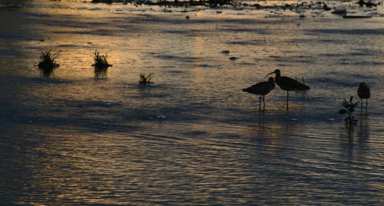 Gran parque eólico ayudará a no dañar aves raras, dice la Corte Suprema
