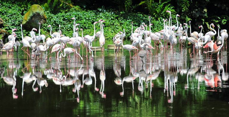 Flock of flamingos standing along the water