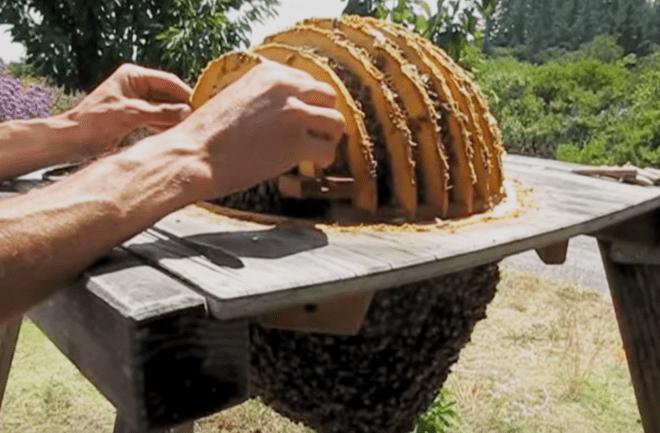 Gaia Bees