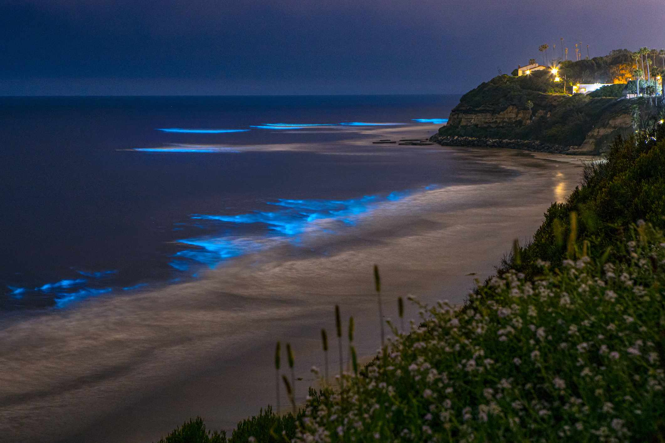 Bioluminescence on San Diego Coastline Beach