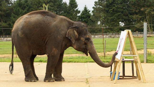 Elephant named Karishma paints on a canvas